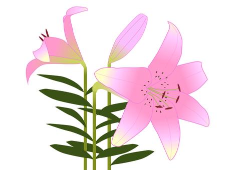 Yuri Pink