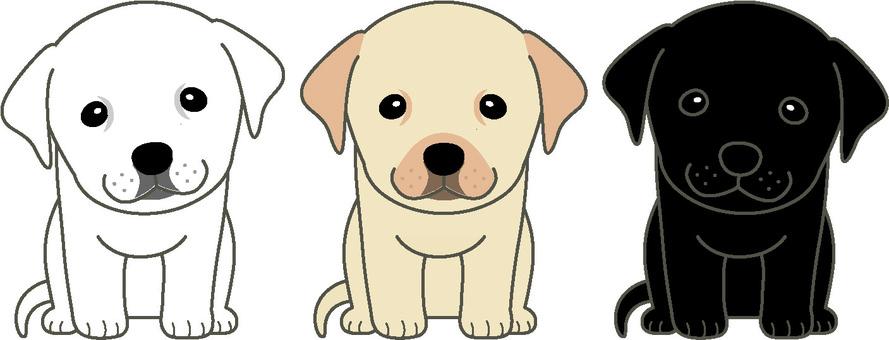 Labrador puppy 1