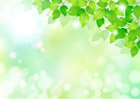 Fresh green material 216