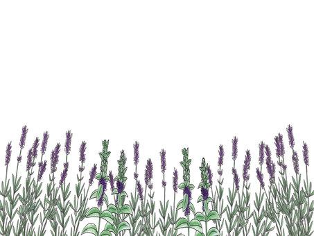 Herb Memo (No Border)