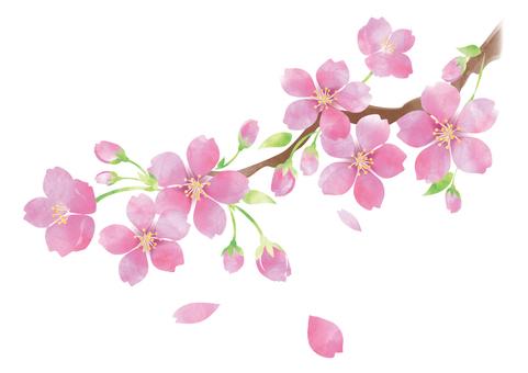 Watercolor-style Sakura 4