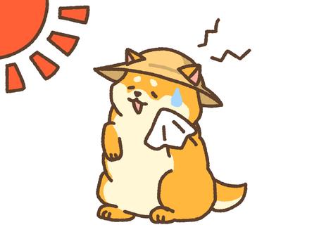 Summer Shiba Inu