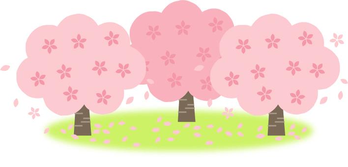 벚꽃 나무 3 개