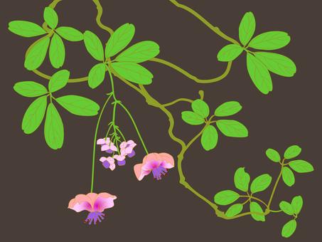 Tsukusa flower