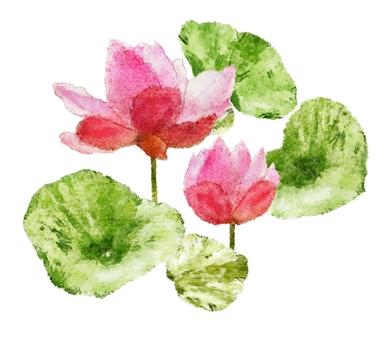 Water lily watercolor wallpaper