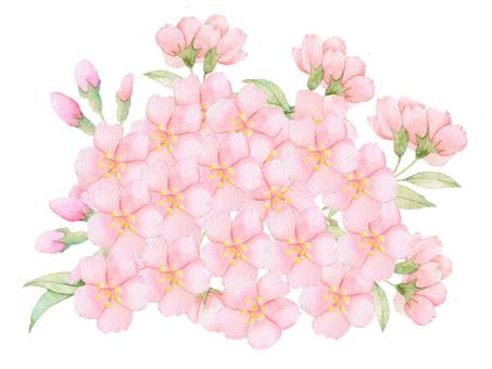 桜 round ★ 0364-F