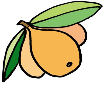 Illustration of loquat
