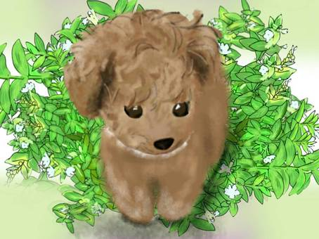 Background toy poodle puppy