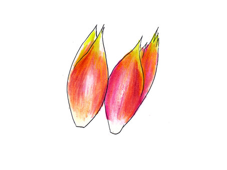 姜mioga