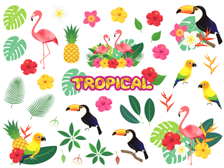 Tropical bird and flower set