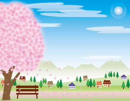 櫻花在公園裡
