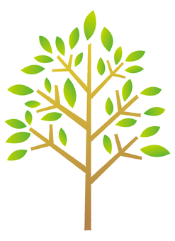 Tree _ green