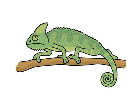 Eboshi chameleon