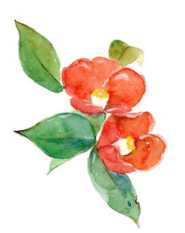 Camellia ③