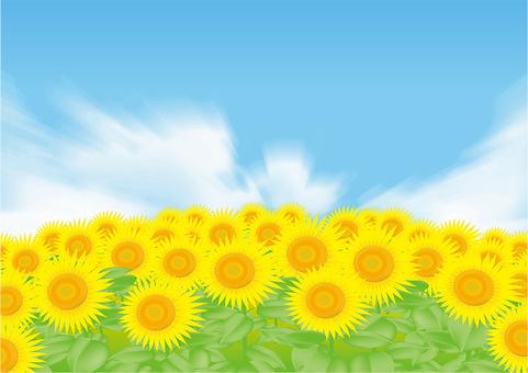 Sunflower background 2