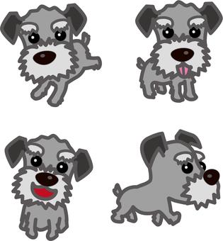 슈나우저 개