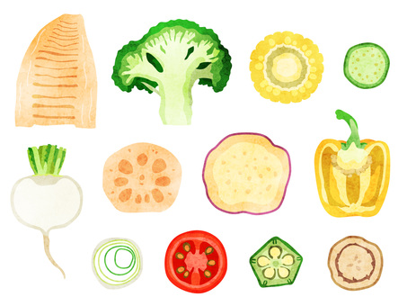 Ingredients _ vegetables _ set (cross section) 2 _ watercolor