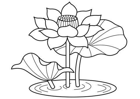 Lotus 1c