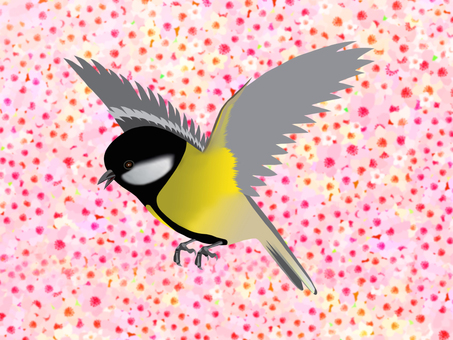 Great tit and cherry blossom