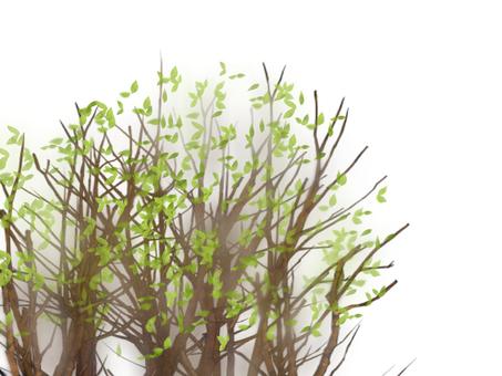 Grass grove