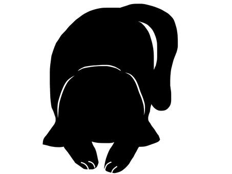 Cat sleepy sleep silhouette