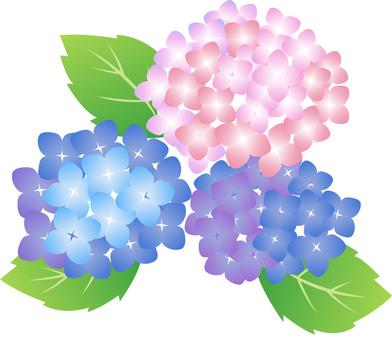 Hydrangea mini material rainy season