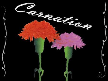 Chalk art style: Carnation