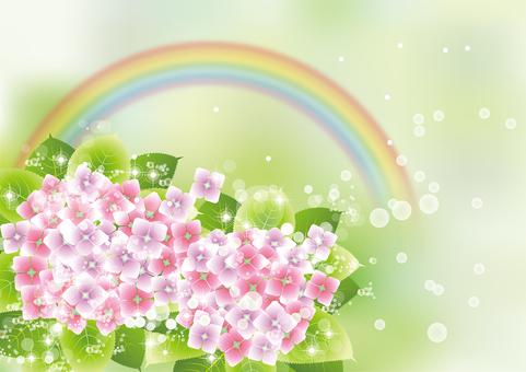 Rainbow & hydrangea 3