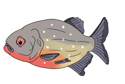 Piranha (piranha nuttery)