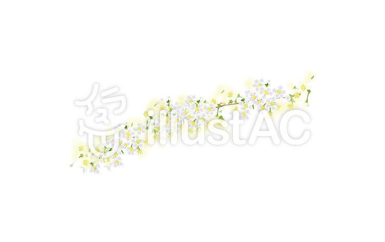 ユキヤナギ白春綺麗3月花2イラスト No 1043467無料イラスト