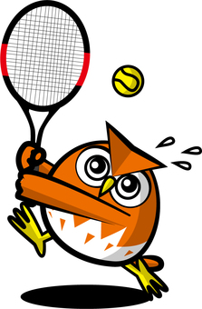 網球貓頭鷹