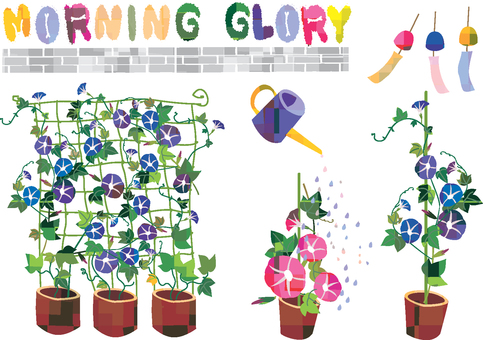 Morning glory garden