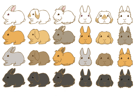Rabbit set line and painting
