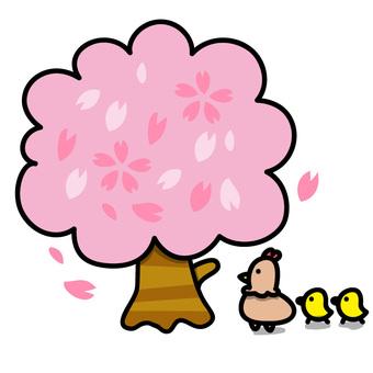 雞的父母和孩子:在櫻桃樹下