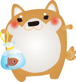 Shiba Inu goldfish