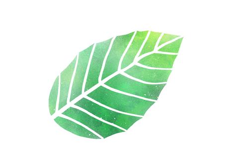 잎 줄기 사정