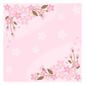 櫻花(櫻花)
