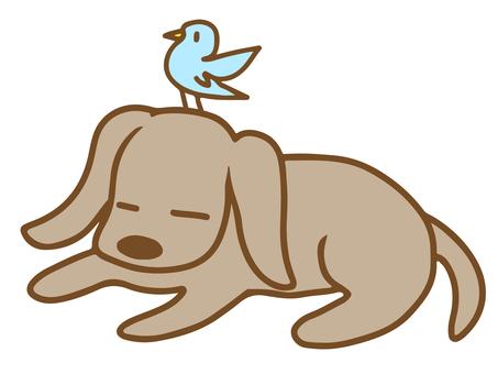 개와 작은 새