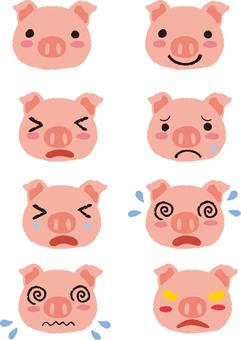 돼지 정리