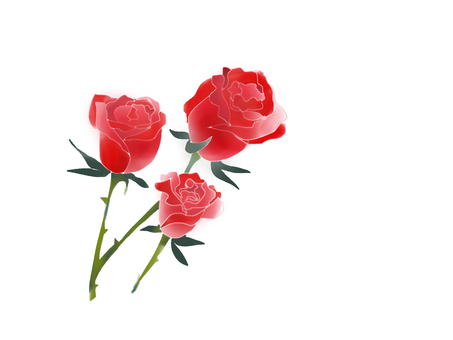Buds of red roses