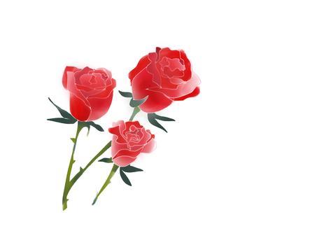 붉은 장미의 봉오리