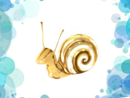 Snail R