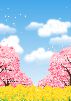 Cherry blossom trees and rape field background