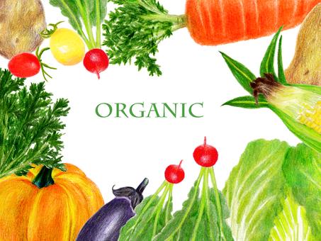 野菜飾り枠(色鉛筆画)