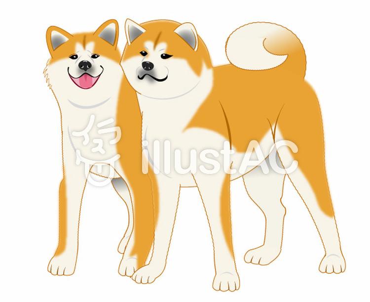 秋田犬ペアのイラスト01のイラスト