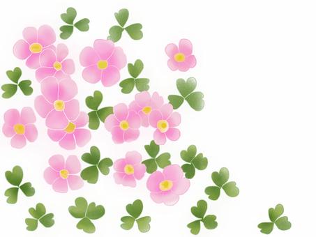옥살리스의 꽃