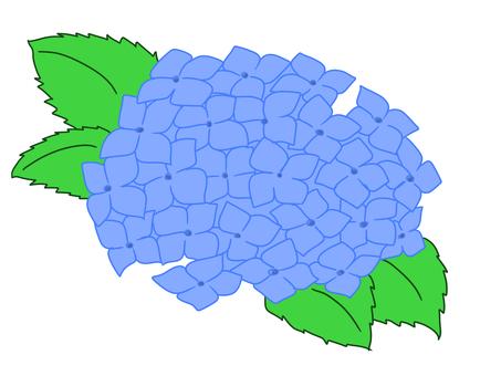 藍色繡球花