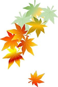 Autumn maple maple