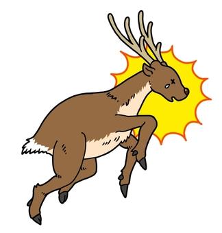 Deer hitting something