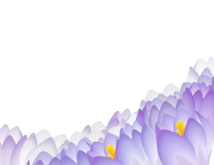 Crocus_ background white